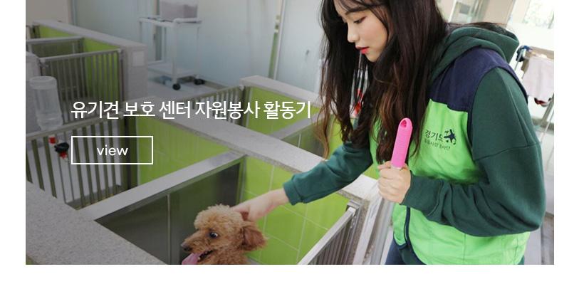 유기견 보호 센터 자원봉사 활동기